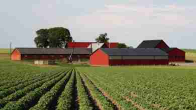Photo of Chickasaw County Farm Bill Program now available