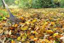 Photo of Annual fall leaf pick-up set for next week