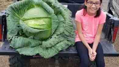 Photo of North Butler girl's cabbage wins her $1,000