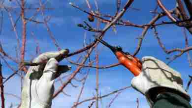 Photo of Time to prune! (How, when, with)