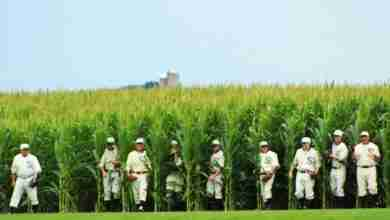 Photo of MLB Confirms Field of Dreams Game Pushed to 2021